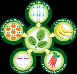 Moringa - health - nutritional content - Plan Verde NGO