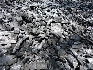 Neem-coal-Plan-Verde-NGO