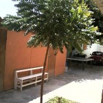Neem-tree-in-Colan-Plan-Verde-NGO