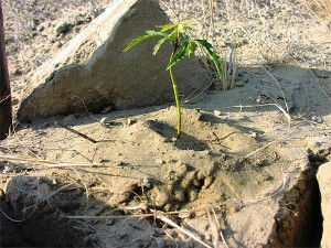 Small-Neem-tree-3-months-Plan-Verde-NGO