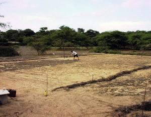 first-nursery-of-neem-trees-Plan-Verde-NGO