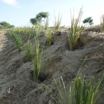 Vetiver-stabilization of water channels -Plan-Verde-e.V.